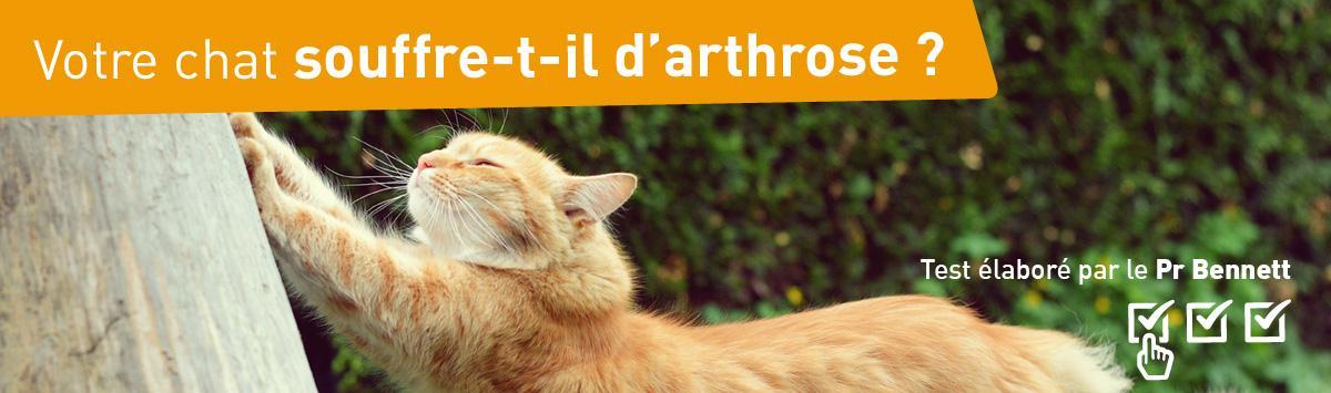 Votre chat souffre t-il d'arthrose ?