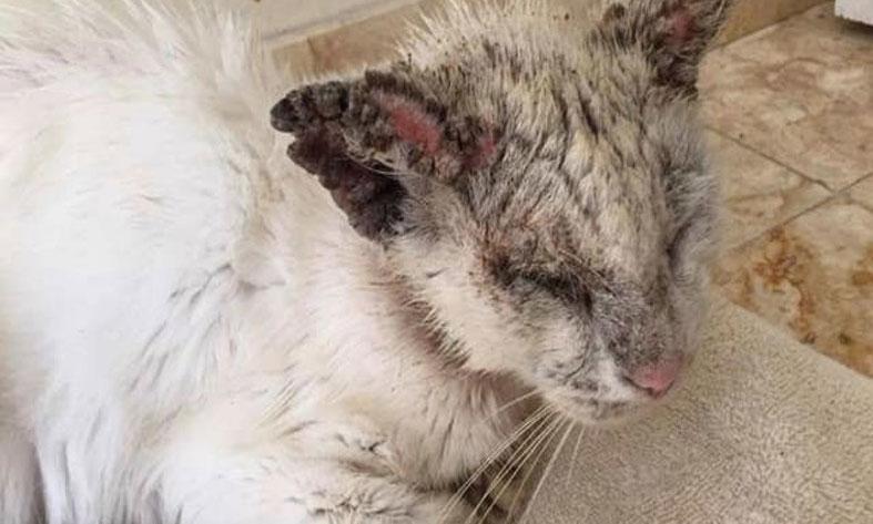 Mon chat a la gale : est-ce grave ?