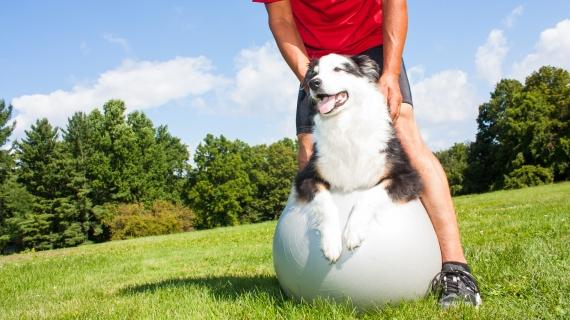 L'arthrose de l'homme et du chien